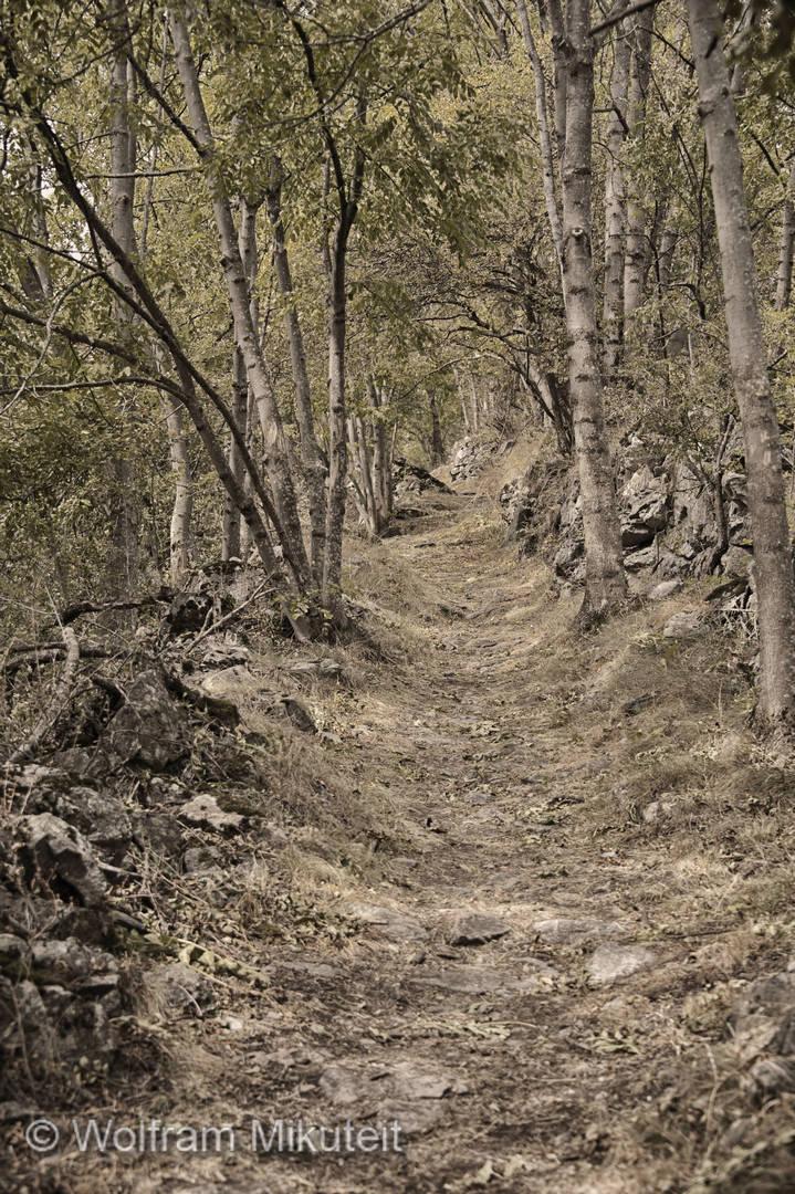 auf dem Weg P55 / LV von Moriglione di Fonda nach Sambuco - Foto: © Wolfram Mikuteit